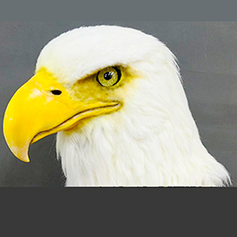 [寫實動物頭套]「Bad lab」老鷹面具製作 bald eagle mask