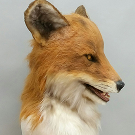 魔人社2018遙控狐狸面具mostudio animatronic red fox mask